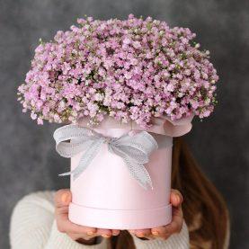 Коробочка розовой гипсофилы